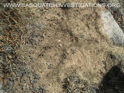 Sasquatch Research Trip Central Colorado 032512 Picture 41