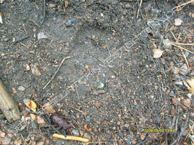 Bigfoot Footprint Rampart Depth