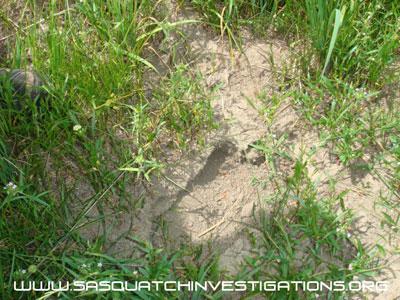 Bigfoot Footprint Image 8