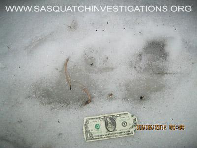 Bigfoot Research Central Colorado Picture 1