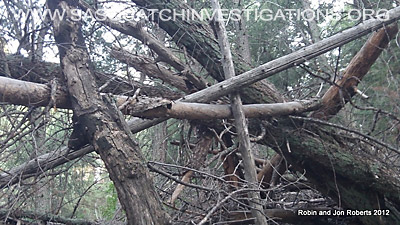 Bigfoot Next Evidence Southern Colorado 3