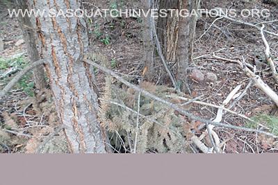 Bigfoot Research Oddities 08-01-16 06