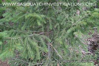 Bigfoot Research Oddities 08-01-16 08