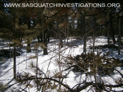 Bigfoot Research Oddities