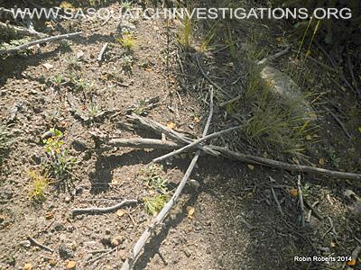 Bigfoot Research Oddities 11-24-14 1