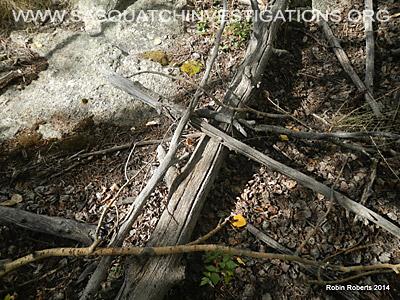 Bigfoot Research Oddities 11-24-14 3