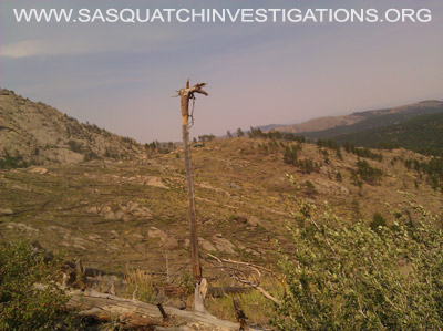 Colorado Sasquatch Research Upside Down Tree