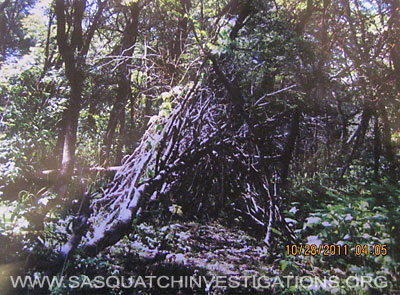 Bigfoot Utah Tree Structure 2