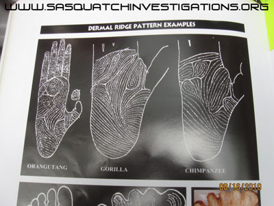 Bigfoot handprint compared to other animals