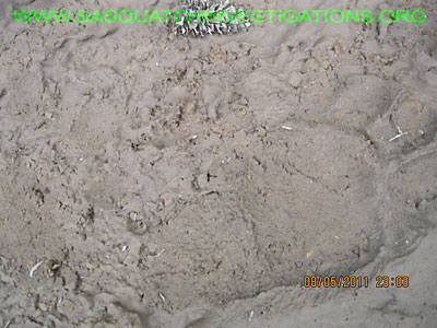 Bigfoot Footprint Colorado Research NW013