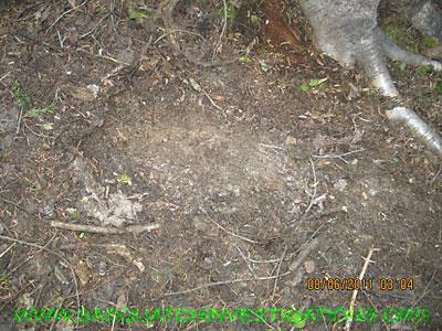 Bigfoot Colorado Research Footprint NW038