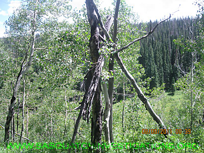 Sasquatch Research Tree Structure NW071