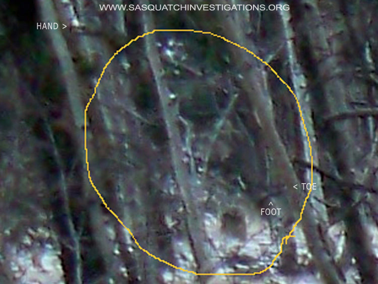 Bigfoot Picture With Pointers
