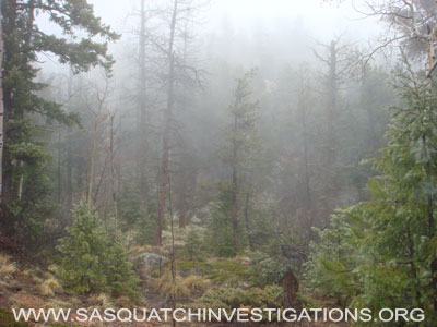 Sasquatch Research in Colorado in November 2011