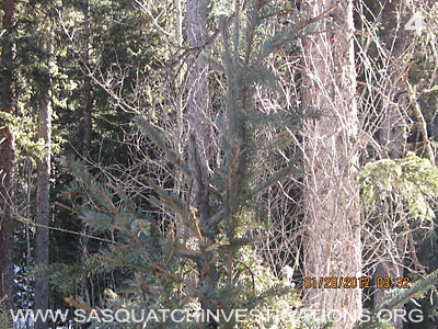 Bigfoot Research Rampart Range Picture 4