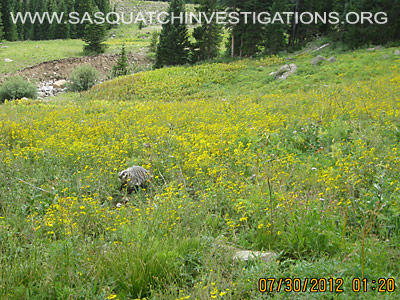 Sasquatch Research In Central And Northern Colorado 1