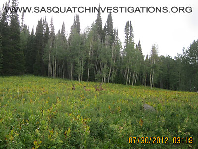 Sasquatch Research In Central And Northern Colorado 2