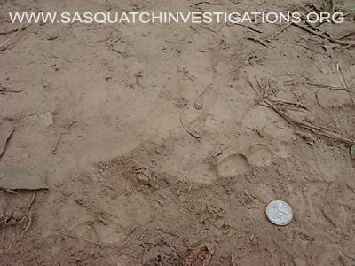 Baby Sasquatch Footpring 11-19-13