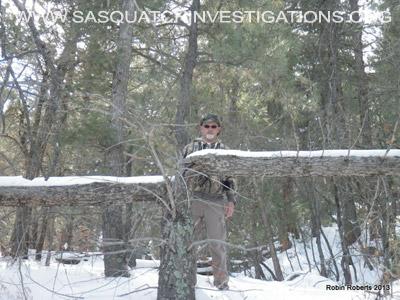 Colorado Bigfoot Tree Break 01