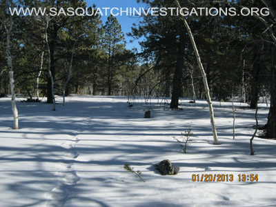 Central Colorado Bigfoot Footprints 012013 1