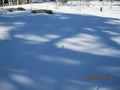 Central Colorado Bigfoot Footprints 012013 2
