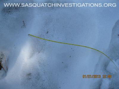 Central Colorado Bigfoot Footprints 012013 8