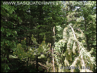 Bigfoot Tree Break 2117