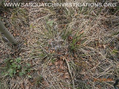 Sasquatch Evidence Of  Predator 060613 4