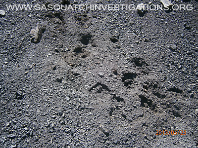 Big Foot Tracks In Colorado 2