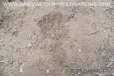 Bigfoot footprint in Colorado 1