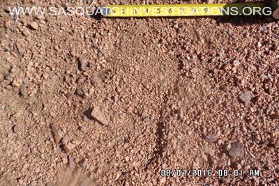 Bigfoot footprint in Colorado 3