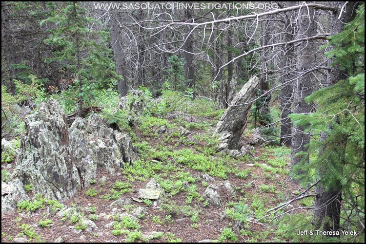 Bigfoot sighting in Colorado 07-20-15 picture 1