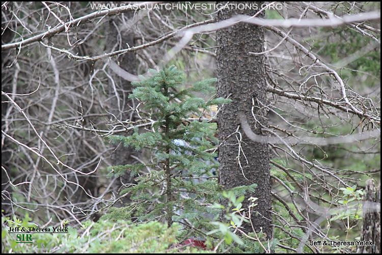 Bigfoot sighting in Colorado 07-20-15 picture 3