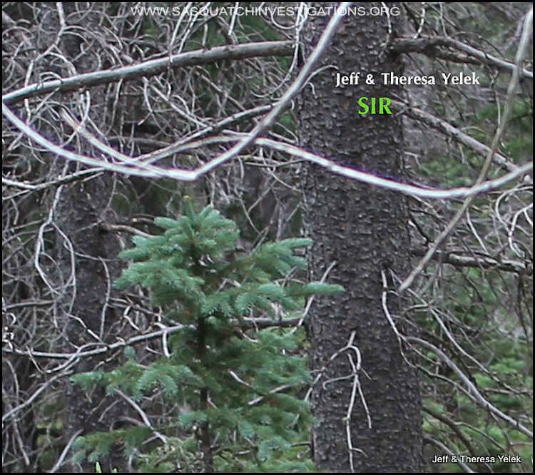 Bigfoot sighting in Colorado 07-20-15 picture 2