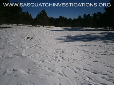 Bigfoot Foot Prints in Colorado 12-19-13 1