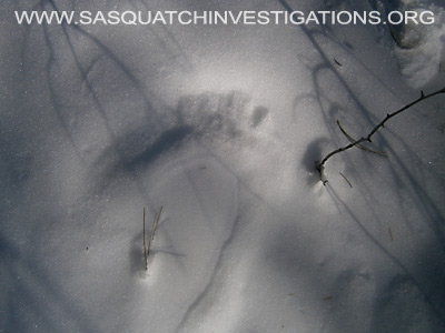 Bigfoot Foot Prints in Colorado 12-19-13 5