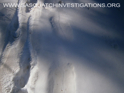 Bigfoot Foot Prints in Colorado 12-19-13 6