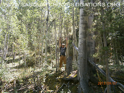 Bigfoot in Colorado Tree Breaks 091213