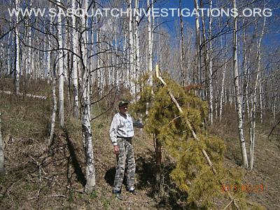 Colorado Bigfoot Tree Breaks 02