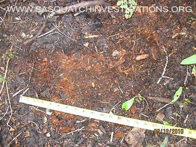 Bigfoot Mid-Tarsal Break Evidence 1