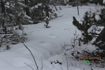 Bigfoot footprints in Colorado 2