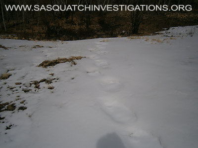 Sasquatch Footprints In Colorado 4