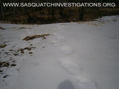 Sasquatch Footprints In Colorado 4