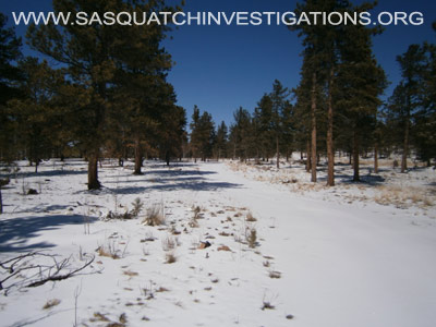 Sasquatch Footprints In Colorado 1