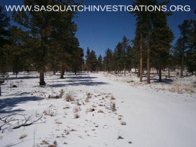 Sasquatch Footprints In Colorado 1