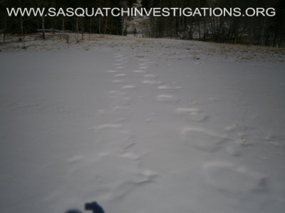 Sasquatch Footprints In Colorado 2
