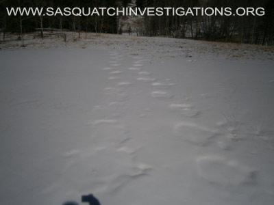Sasquatch Footprints In Colorado 2