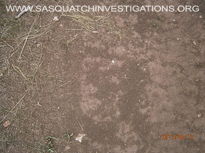 Sasquatch Footprints in Colorado 08-16-13 1