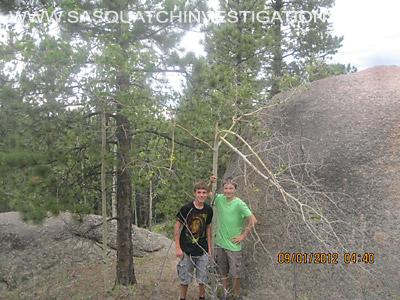 Sasquatch Tree Break Evidence In Colorado 2