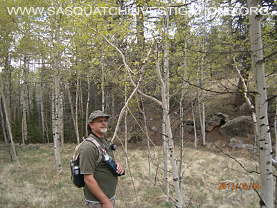 Tree Breaks in Co Bigfoot Research Area 1